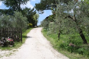 L'Agriturismo Merlano ha 40 ettari di terreno coltivati a frutteto e uliveto