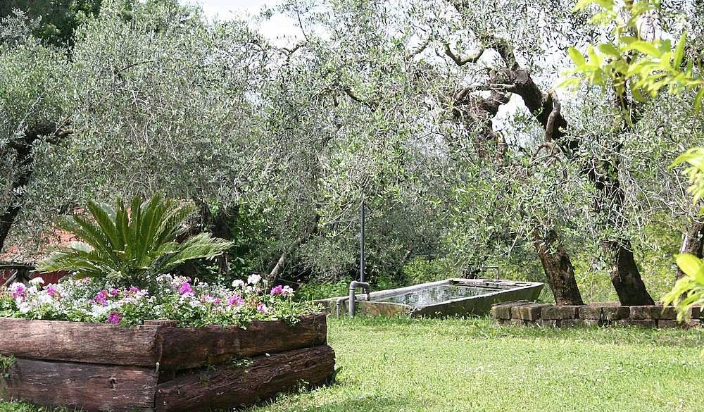 La tenuta dell'Agriturismo Merlano è grande, ha uliveto e frutteto